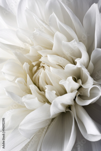 Plagát, Obraz white dahlia and light