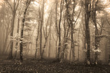 Strange misty forest