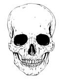 Detailed Skull Image