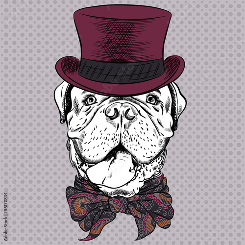 vector funny cartoon hipster dog French Mastiff - 96170844