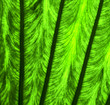 leaf and his veins b  macro close up