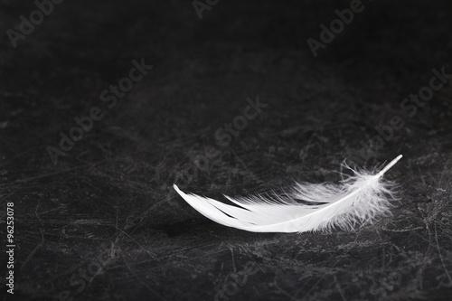 Leinwandbild Motiv Trauerkarte - Einzelne weiße Feder