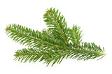 Fir tree branch isolated on white - 96325636