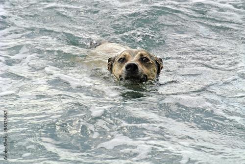Cane che fa il bagno in mare imagens e fotos de stock royalty free no imagem - Bambolotti che fanno il bagno ...