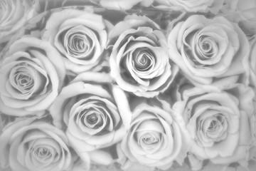 Rosenhintergrund, Trauer