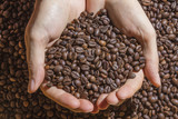 Fototapety Roasted brown coffee beans hold in the hands