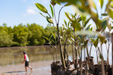 Young green mangrove trees preparing for plant at a reserve site