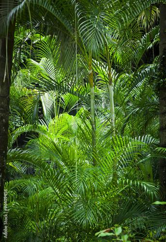 Poster, Tablou Lush green jungle background