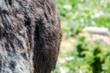 Obrazy na płótnie, fototapety, zdjęcia, fotoobrazy drukowane : Equus africanus asinus BURRO