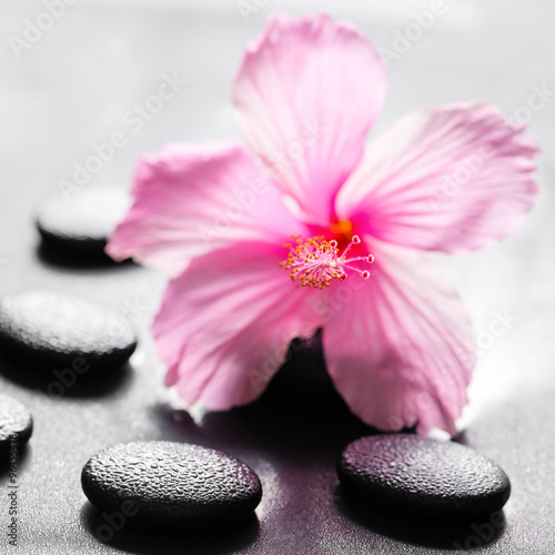 beautiful spa concept of pink hibiscus flower on zen basalt ston