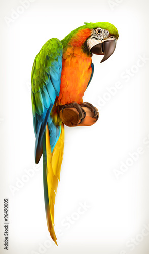 papagei-macaw-vektor-illustration