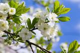 spring tree - 96528222