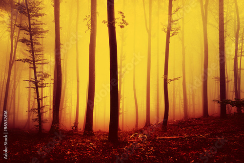 Fire red saturated autumn season foggy forest landscape background. Oversaturated yellow red forest trees background.