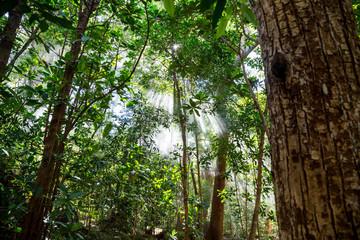 Nebel und Sonnenstrahlen im grünen dichten Dschungel in Costa Rica © Robert Leßmann