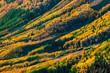 Colorado Fall Foliage Pattern