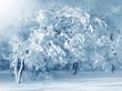 Detaily fotografie Winter scenery, frosty trees