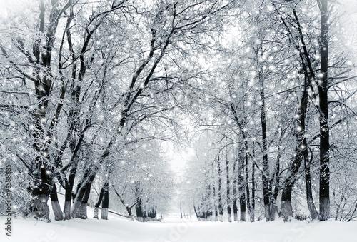 Winter scenery, snowstorm in park