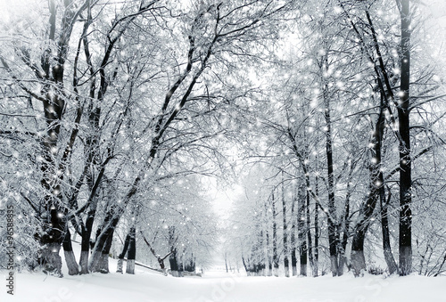 Winter scenery, snowstorm in park Poster