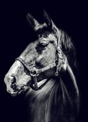 Black and white  horse portrait © dreamer82
