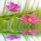 Naklejka Fresh green grass with dew drops closeup. Nature Background