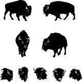 buffalo, black illustration, isolation, figure, silhouette, portrait, various postures of the animal, buffalo head and figure
