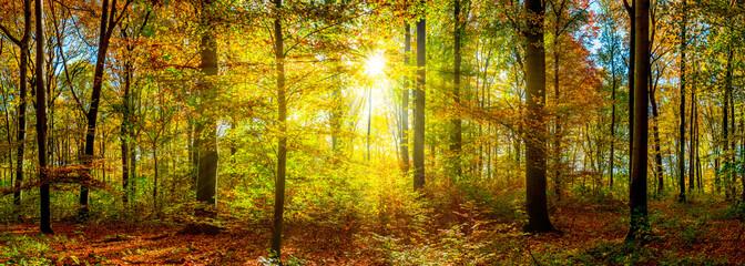 Wald Panorama im Herbst mit Sonnenstrahlen