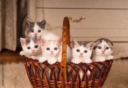Naklejka Five cute kittens in braided basket