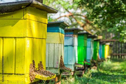 Zdjęcia na płótnie, fototapety, obrazy : Wooden beehives in garden
