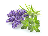 Lavender with thyme - 96813610