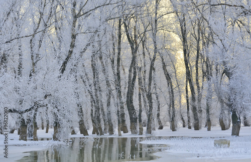 Obraz Frosty winter trees