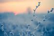 Piante controluce al mattino in inverno