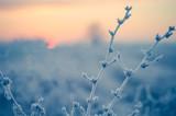 Piante controluce al mattino in inverno - 96846891