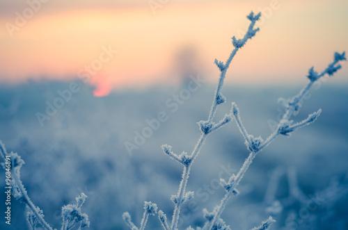 Poster Piante controluce al mattino in inverno