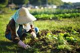 farmworking person in rural area - 田舎の集落で農作業・畑仕事をする高齢者