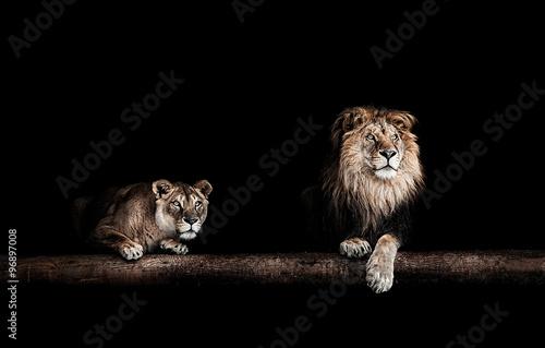 Zdjęcia na płótnie, fototapety na wymiar, obrazy na ścianę : Lion and lioness, Portrait of a Beautiful lions, lions in the da