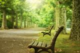 ベンチと並木道