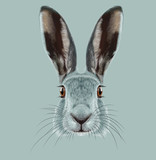 Fototapety Illustrated Portrait of Hare.
