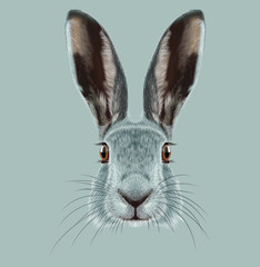 Illustrated Portrait of Hare.