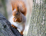 furry young squirrel sitting on tree