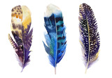 Fototapety Hand drawn watercolor feather set.  Boho style. illustration iso