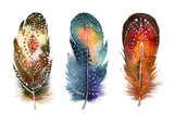 Hand drawn watercolor feather set.  Boho style. illustration iso - 97019810