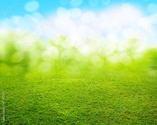 grass background - 97042893