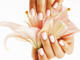 beauty delicate hands with manicure holding flower lily close up isolated on white - 97155885