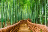 Kyoto, Japan Bamboo Forest - 97156437