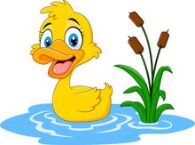 Cute Baby Duck Floats On Water  Sticker