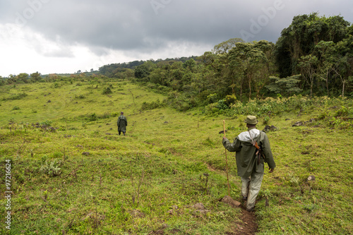 Gorila trek inside Virunga National Park in Democratic Republic of Congo Poster