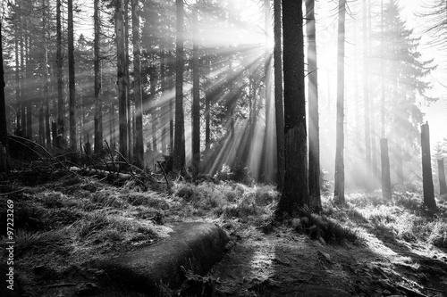 Lichtstrahlen im Wald - monochrom © ohenze