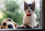 Cat and dog - 97228255
