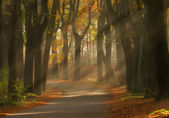 Sunrays and beautiful autum colors in the forest.