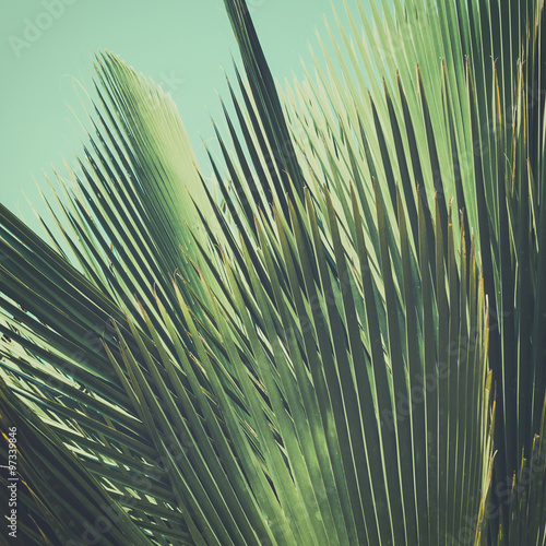 Abstract tropical vintage background. Palm leaves in sunlight. - 97339846